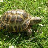 Стратегия «Черепаха» для бинарных опционов