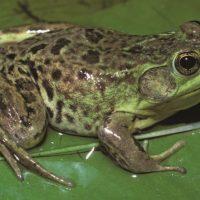 Стратегия Crazy Frog для бинарных опционов